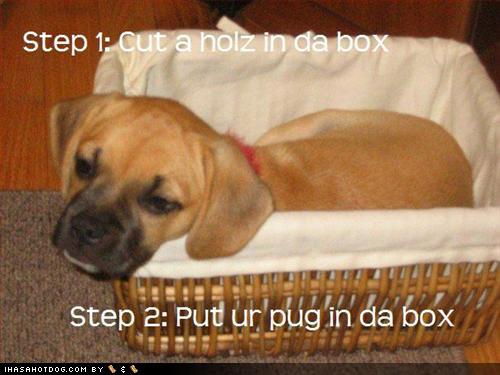 LOLDog pug in da box
