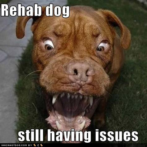 Funny-dog-pictures-rehab-dog-has-issues