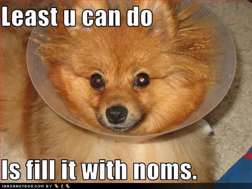 Funny-dog-pictures-fill-noms