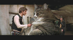 Jabba_the_kitty