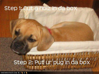 Loldog_pug_in_da_box