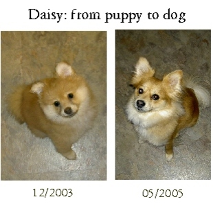 Daisy_from_puppy_to_dog
