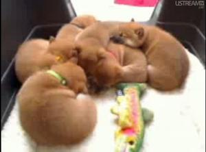 Box_o_puppies